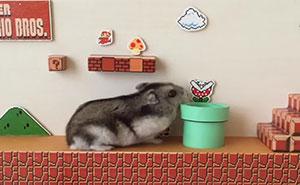 Super Hamster Bros.