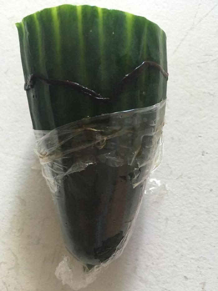 tesco-cucumber-worm-funeral-wes-metcalfe-2