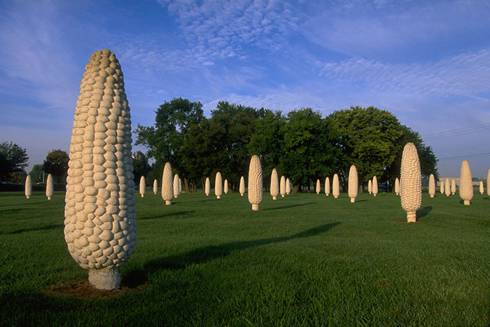 Field of Corn, Dublin, Ohio. A Field Of Giant Cement Corn Cobs
