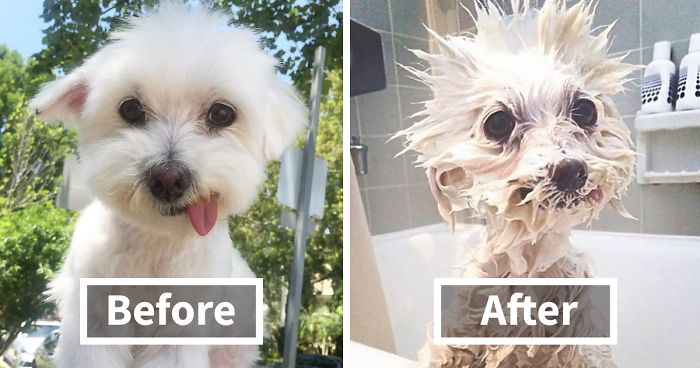 89 Funny Dog Pics Before And After A Bath Bored Panda