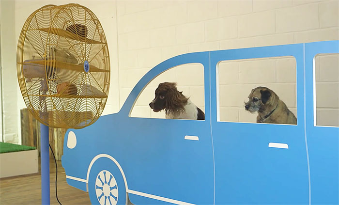 world-first-dog-art-exhibition-dominic-wilcox-london-16