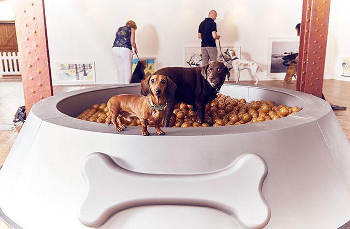 world-first-dog-art-exhibition-dominic-wilcox-london-3
