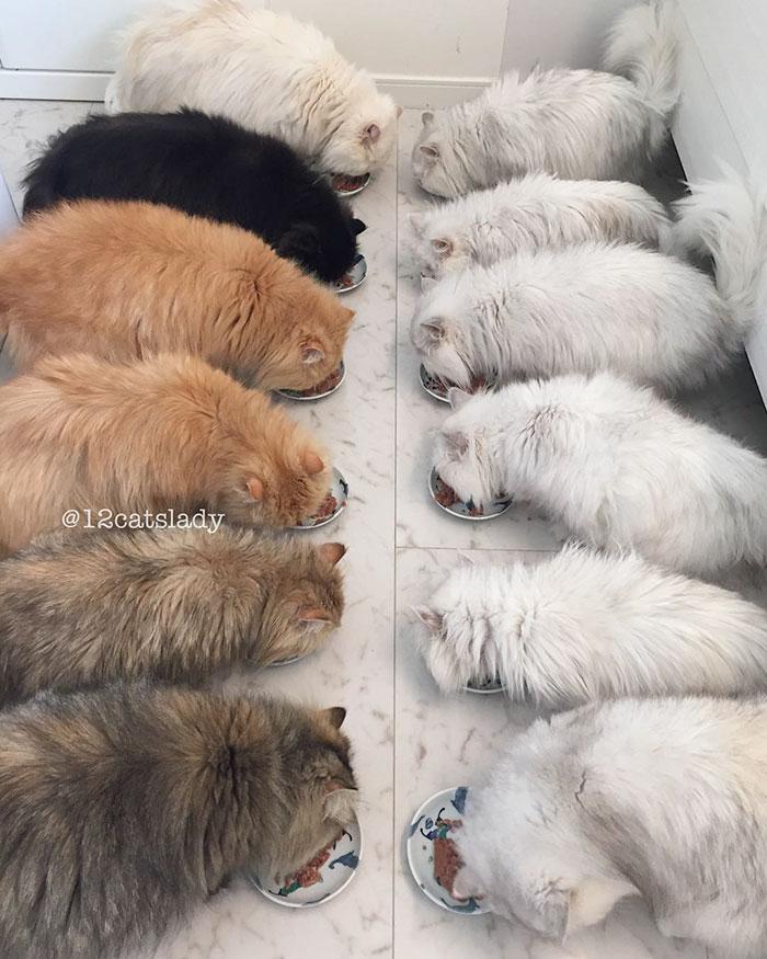 12-cats-lady-japan-12