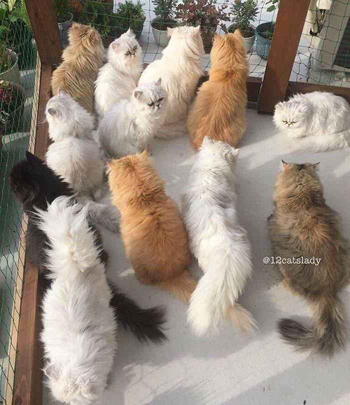 12-cats-lady-japan-14