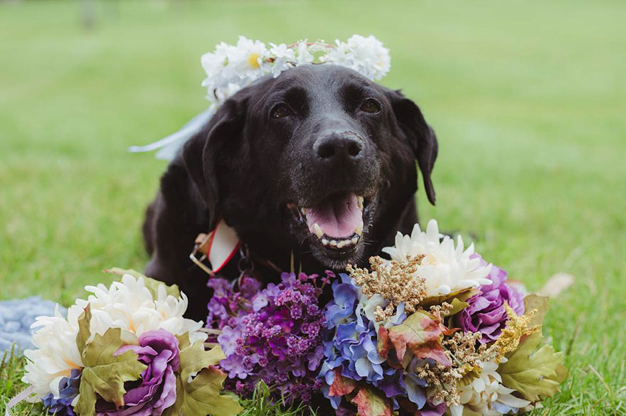 15-year-old-dying-dog-wedding-charlie-kelly-oconnell-1