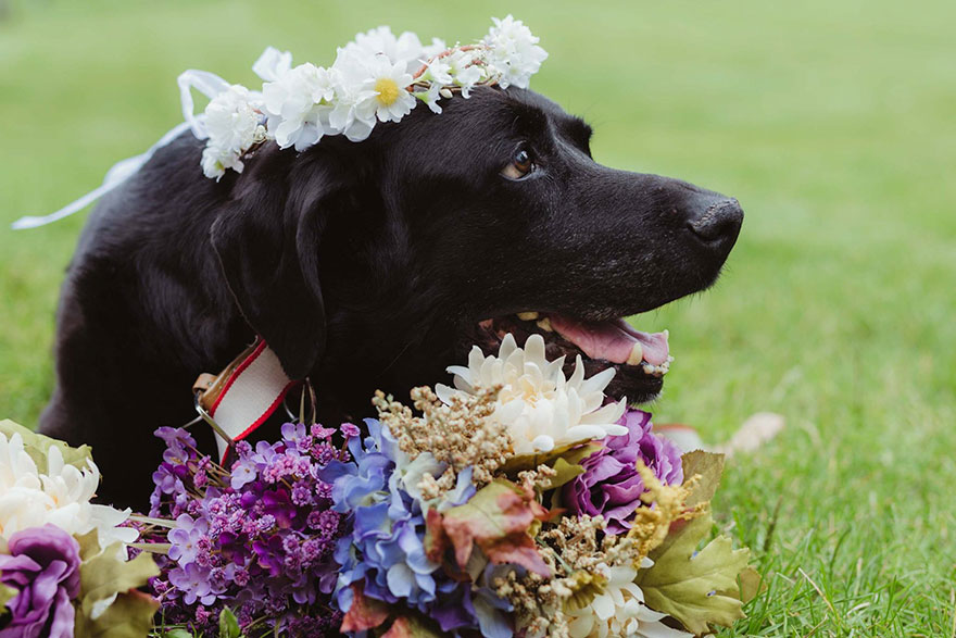15-year-old-dying-dog-wedding-charlie-kelly-oconnell-3