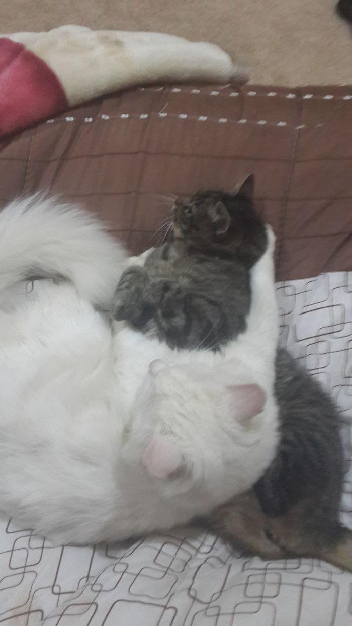 Such A Warm Comfy Pillow