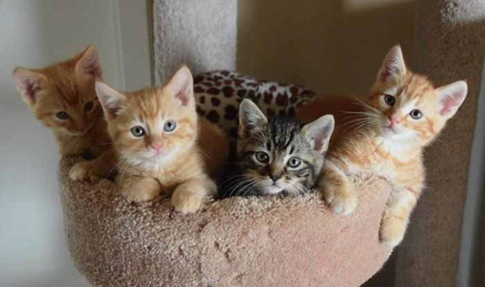 8000-dollars-anonymous-donation-animal-shelter-9