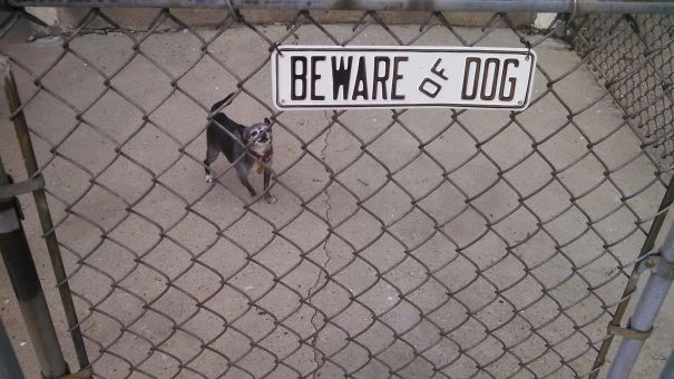 Beware Of Dog (as In, Please Be Aware, Don't Step On Him)