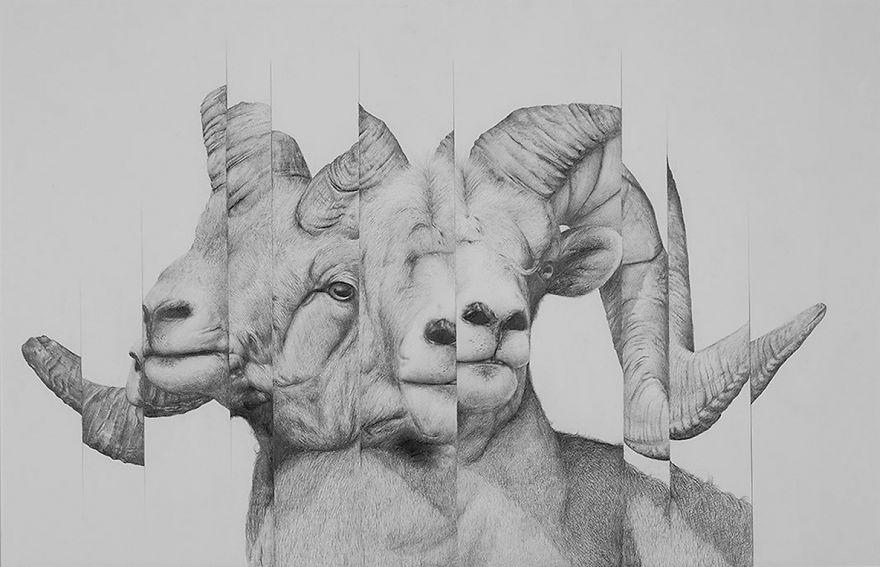 I Drew Some Distorted Animal Portraits