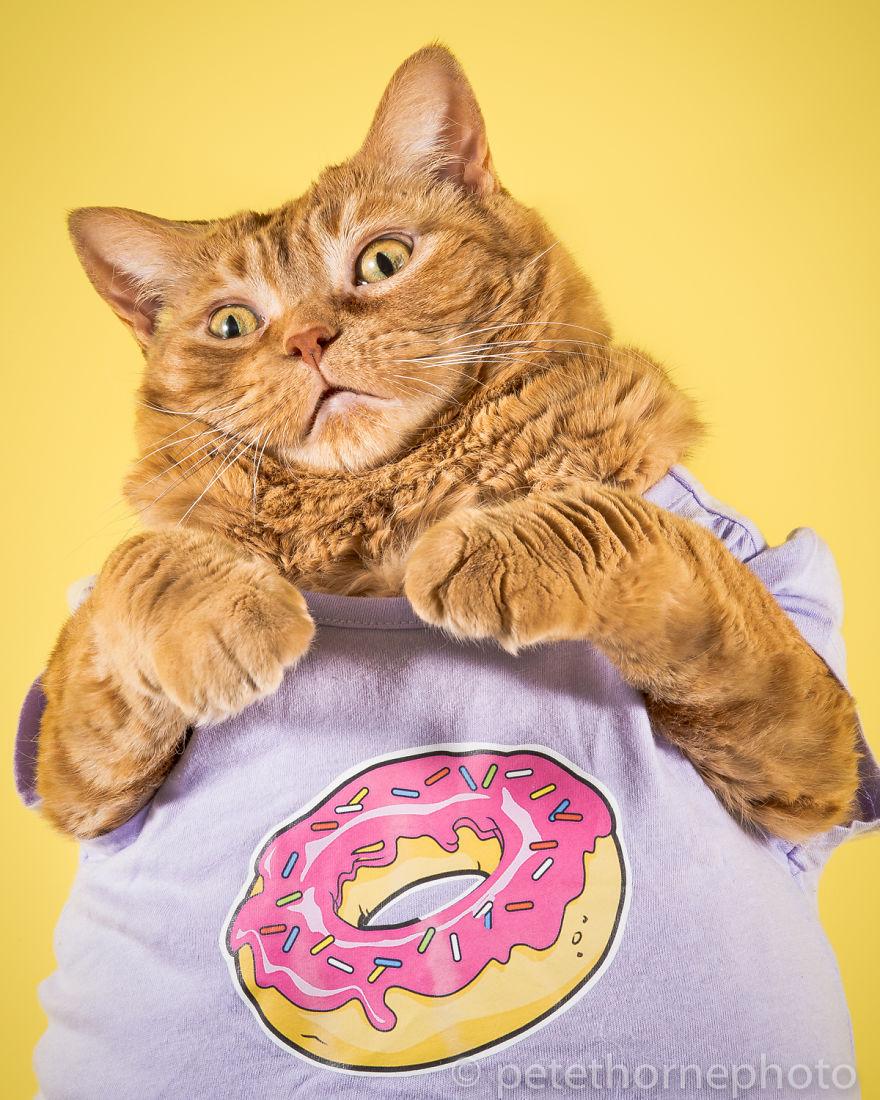Beedee Loves Donuts