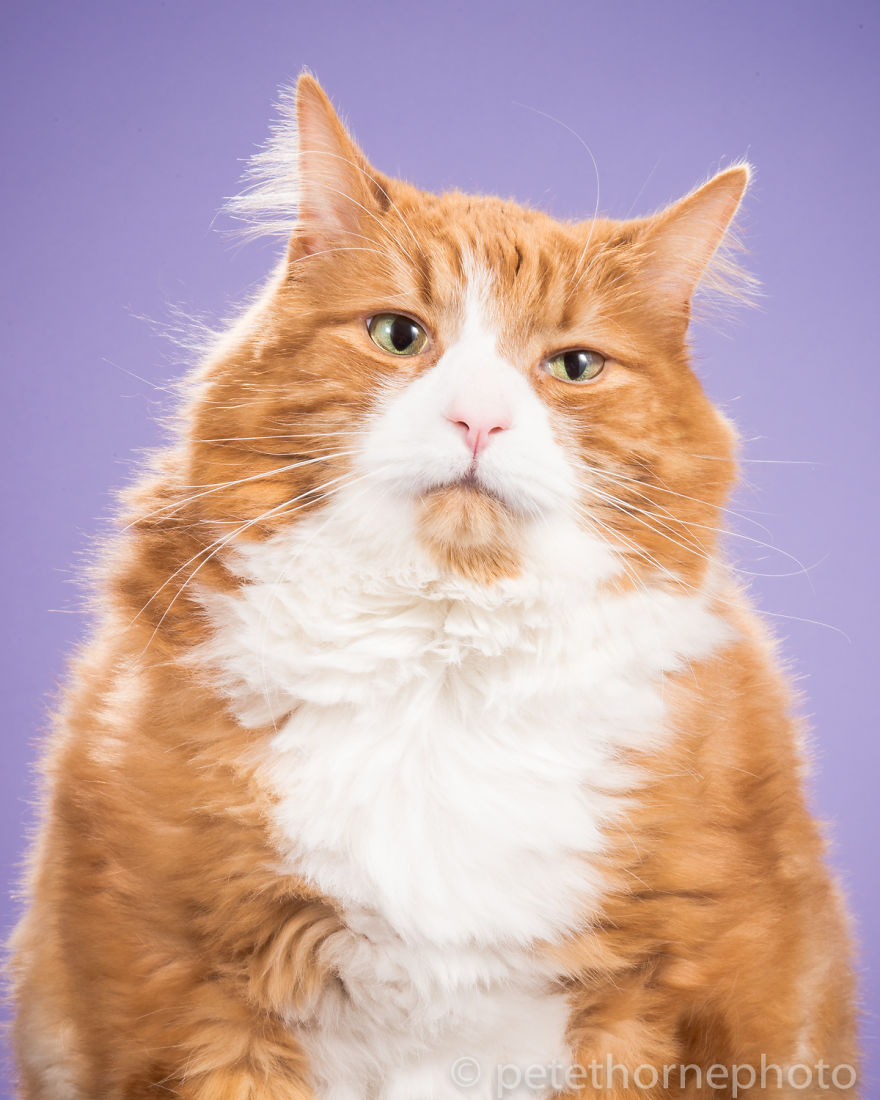 Top 15 Amazingly Fat Cats - Neatorama