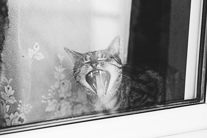 Cat And Window – A Perfect Mix