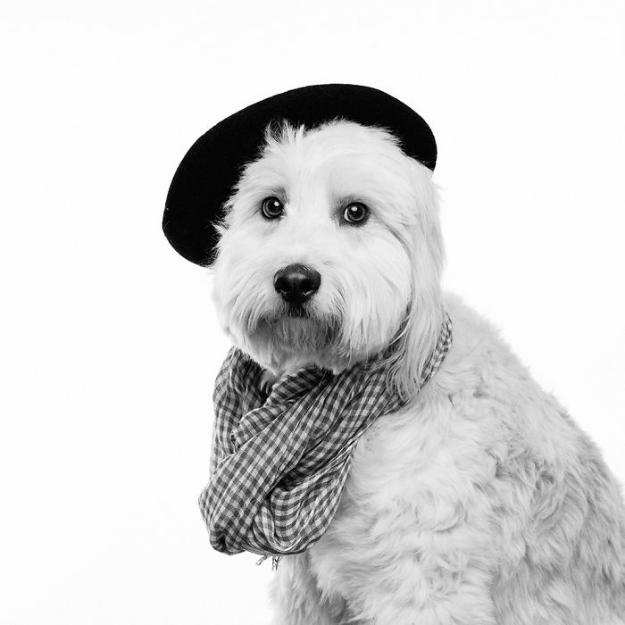 I Dressed Dogs Up As Famous People And Photographed Them To Raise Money For My Local SPCA
