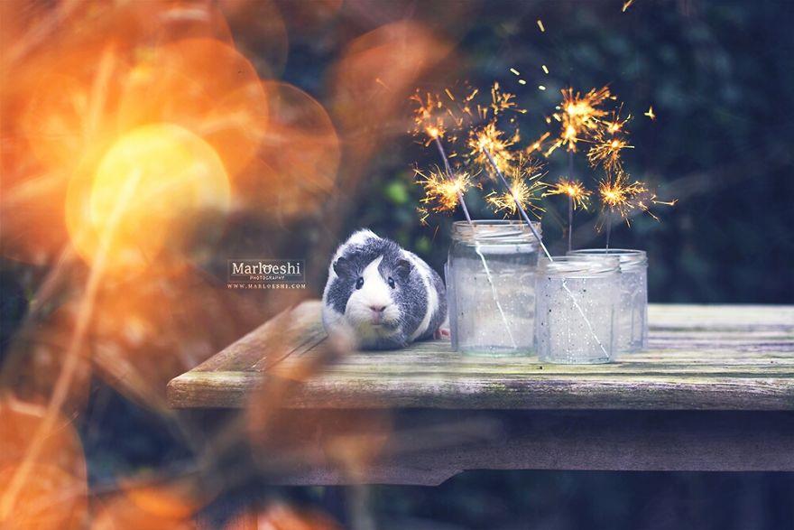 Mieps The Photogenic Piggy