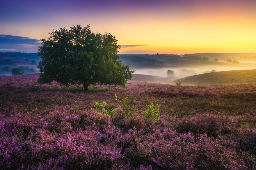 Purple Heaven 57d111a3ef241 880