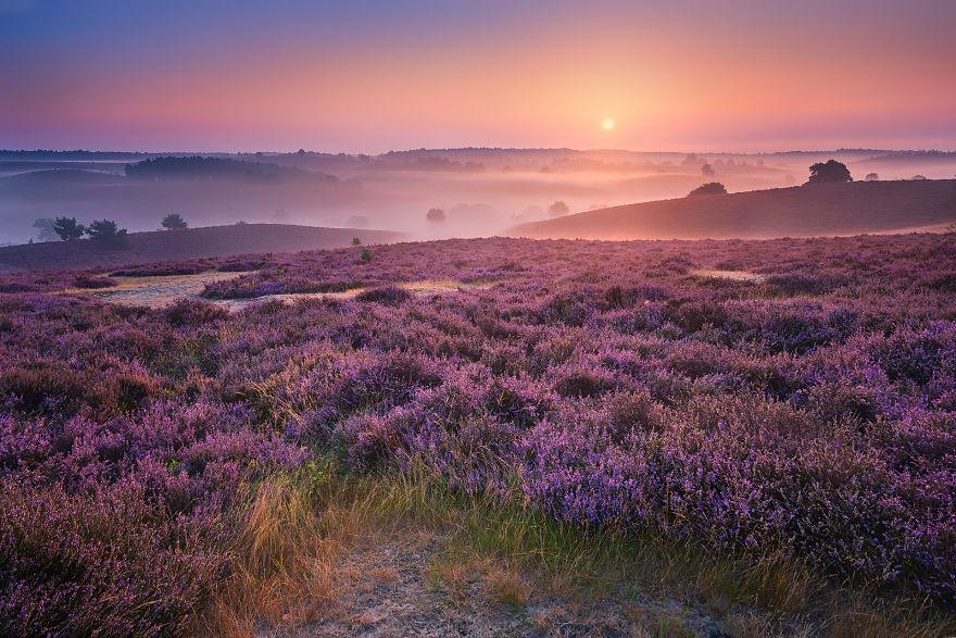 Purple Hills 57d1119a80661 880