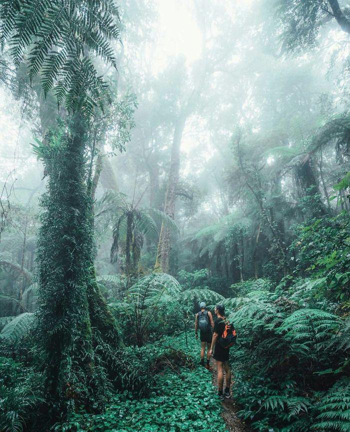 Some Proper Jungle Experience