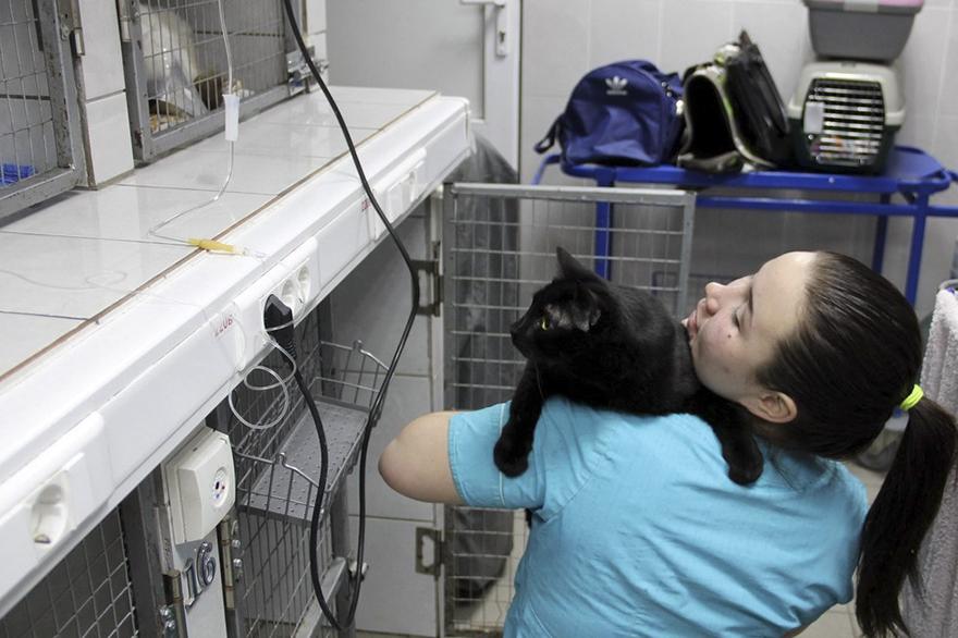 adopted-doctor-cat-helping-animals-juliya-abramova