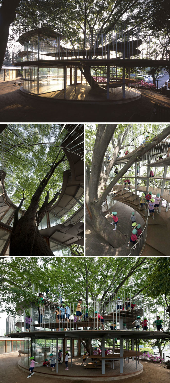 Japanese Kindergarten Built Around A Tree
