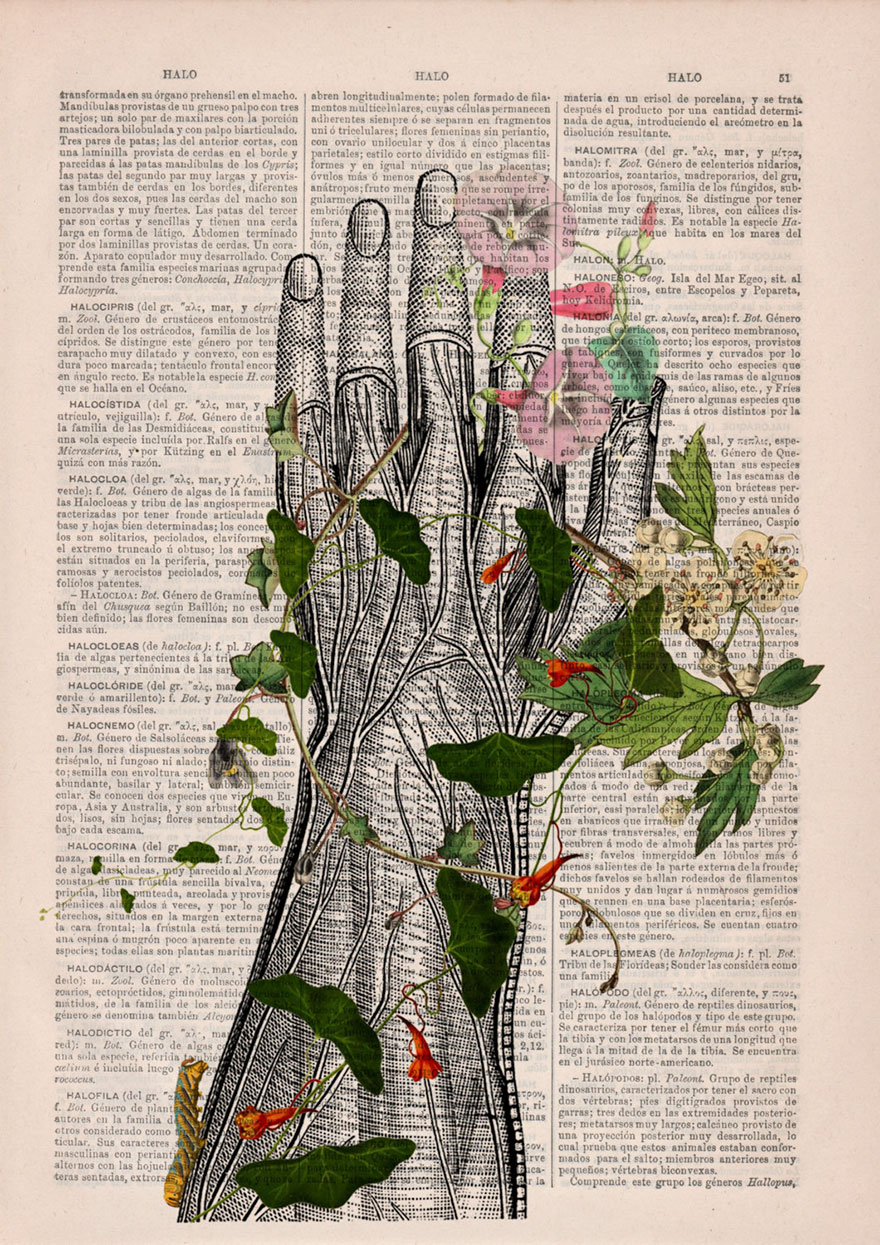 anatomy-illustrations-old-book-pages-prrint-19