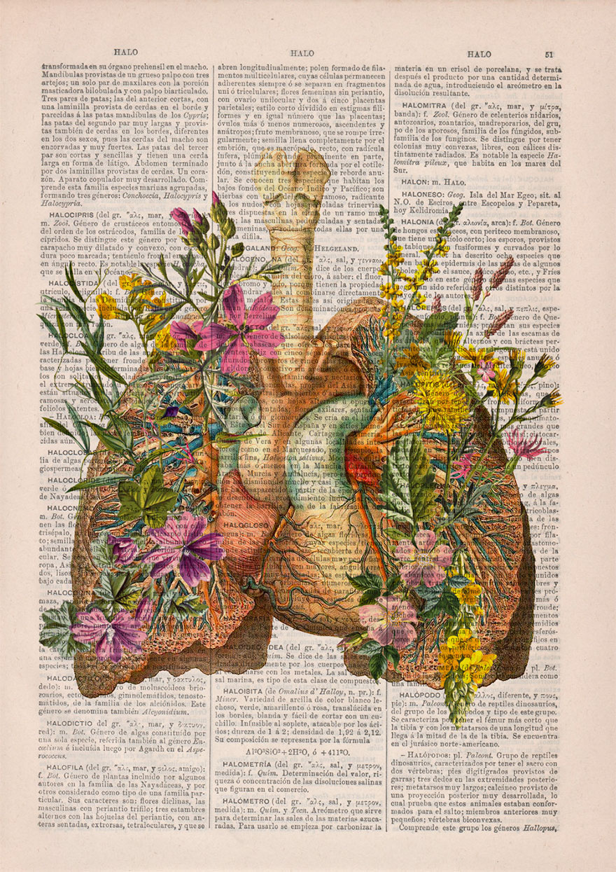 Floral Anatomical Illustrations Breathe New Life Into Old Discarded ...