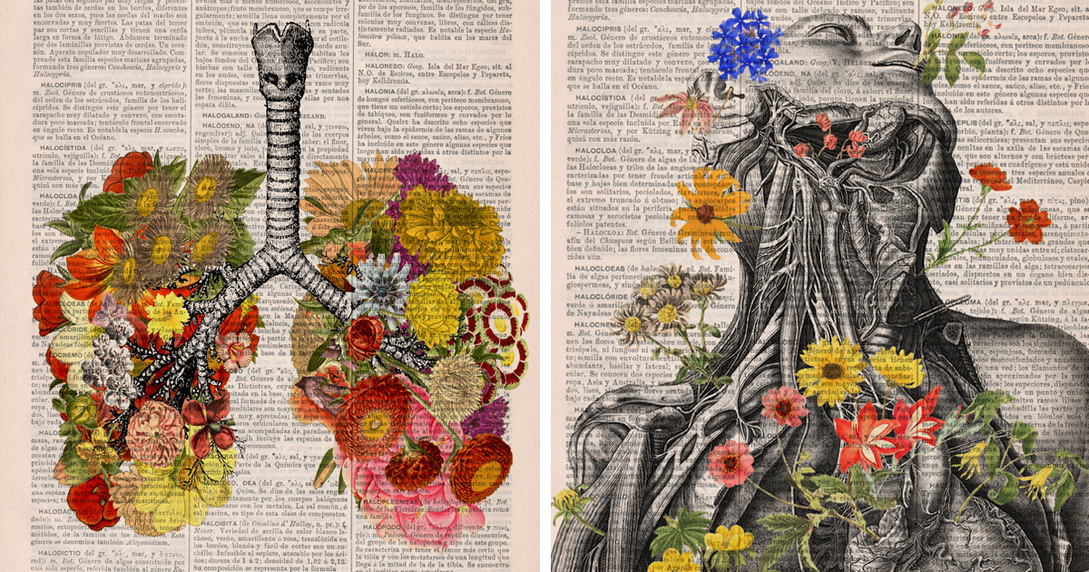 Floral Anatomical Illustrations Breathe New Life Into Old Discarded Books