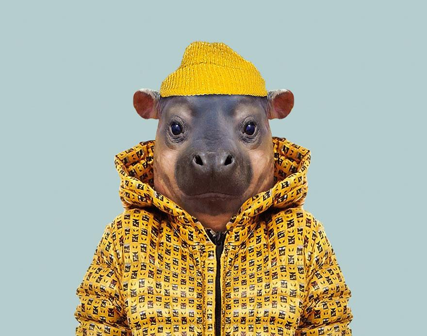 Pygmy Hippopotamus (Calf)
