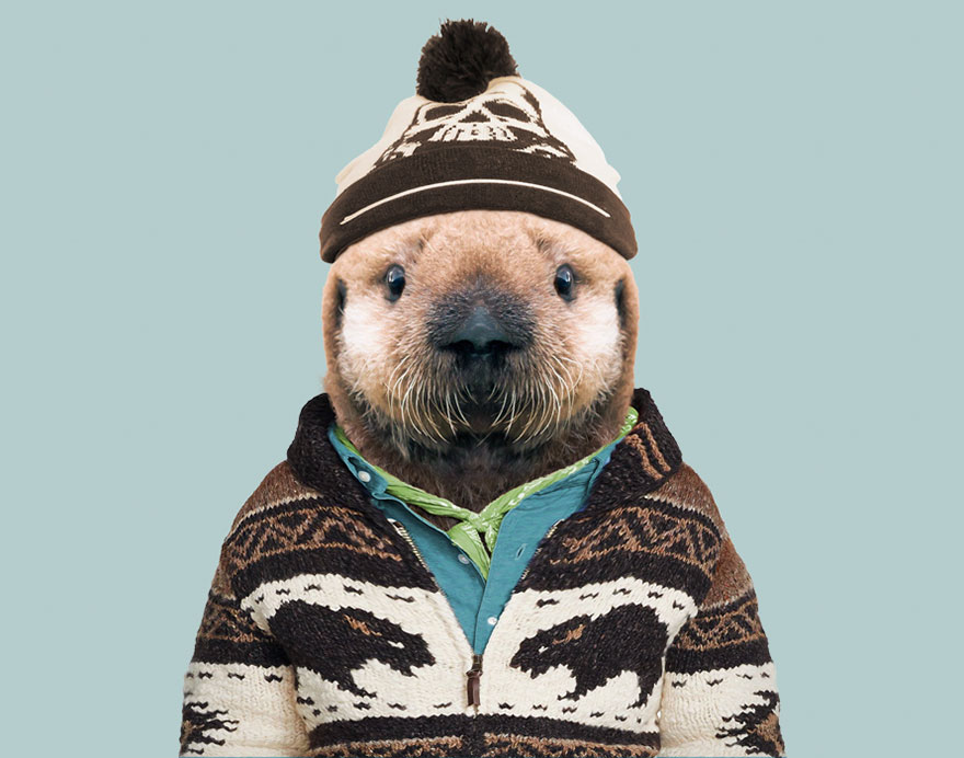 Sea Otter (Pup)
