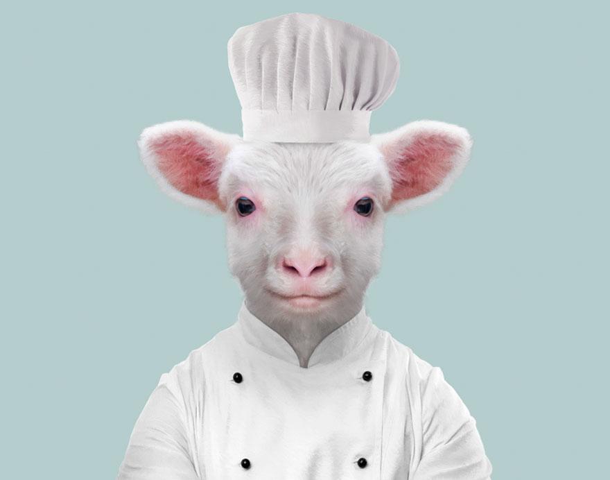 Sheep (Lamb)