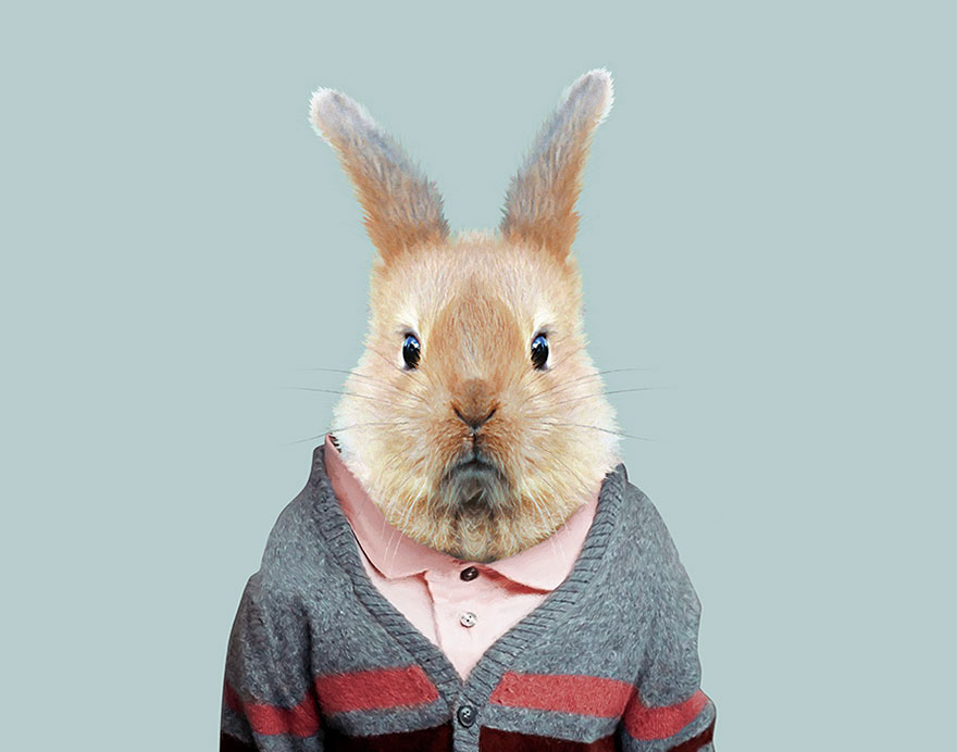this artist spent 3 years �dressing� zoo animals like