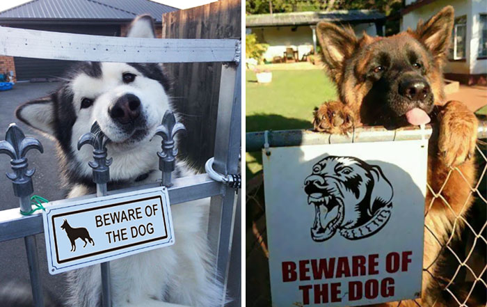 """10+ Dangerous Dogs Behind """"Beware Of Dog"""" Signs"""