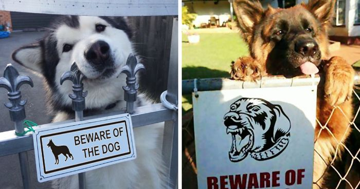 Image of: Posts 47 Dangerous Dogs Behind Beware Of Dog Signs Bored Panda 47 Dangerous Dogs Behind Beware Of Dog Signs Bored Panda