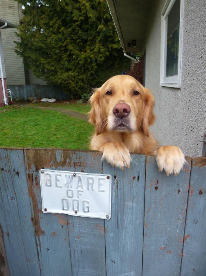 beware of the dog character analysis