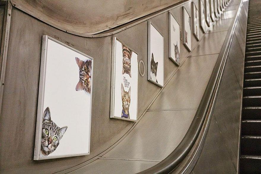 cat-ads-underground-subway-metro-london-4