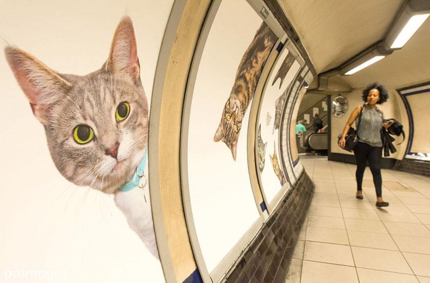 cat-ads-underground-subway-metro-london-6