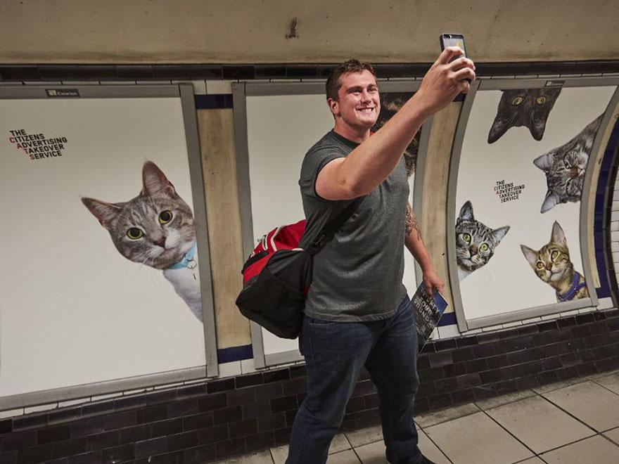 cat-ads-underground-subway-metro-london-8