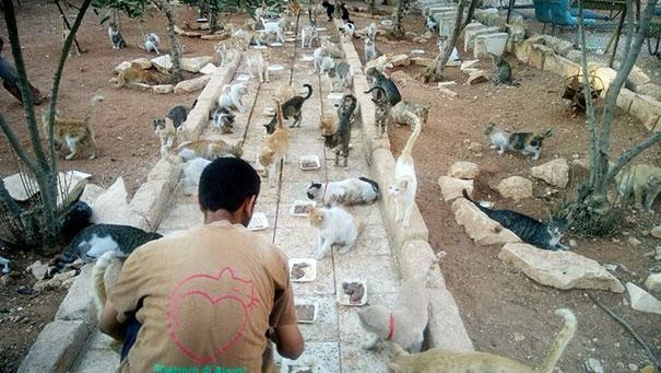 cat-man-aleppo-syria-3