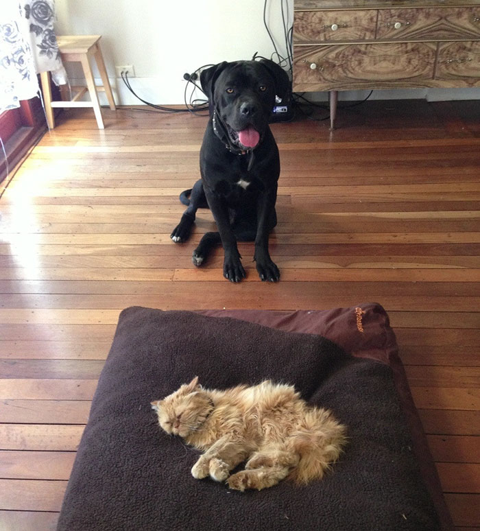 Dogs That Had Their Bed Stolen