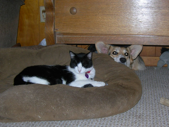 119 Asshole Cats Who Stole Dog Beds And Didn T Give A Damn