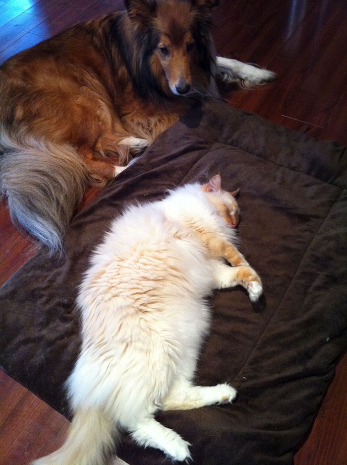 Cats That Had Their Bed Stolen