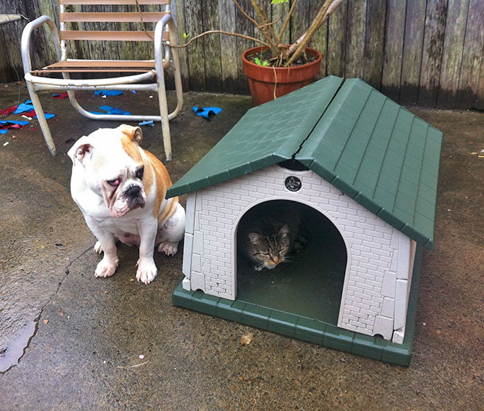10 Asshole Cats Who Stole Dog Beds And Didn T Give A Damn