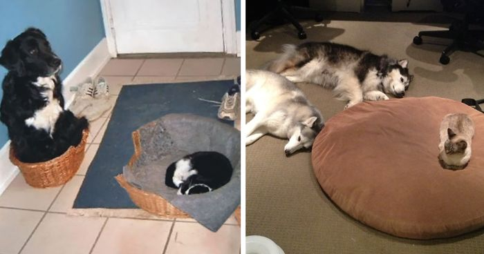 Dog Cat Bed Steal