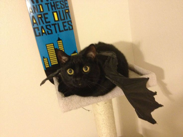Here's My Black Kitty Going As Toothless For Halloween