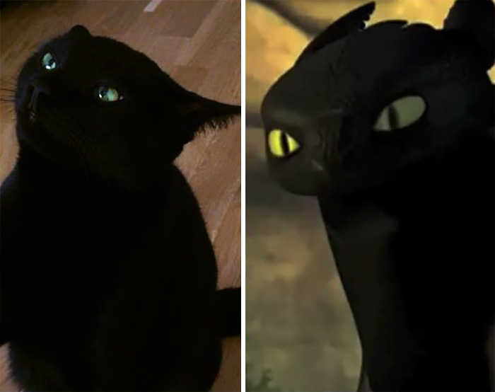 So I Hear My Sister's Cat Gilgamesh Looks Like Toothless
