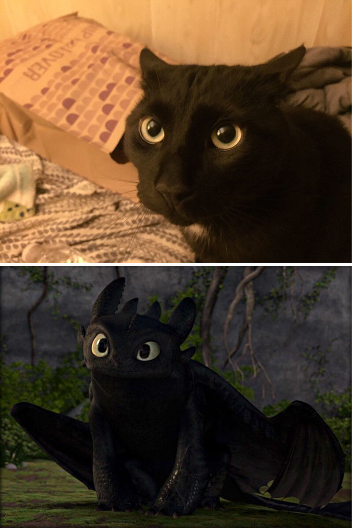 Cat That Looks Like Dragon