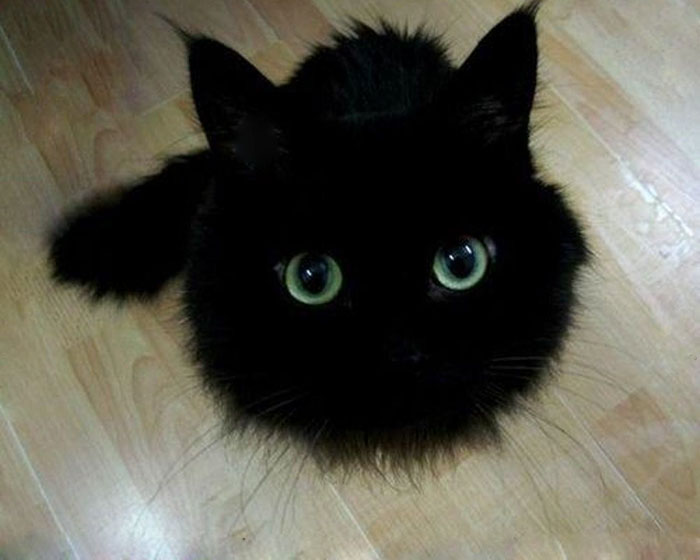 This Black Cat Looks Like Toothless