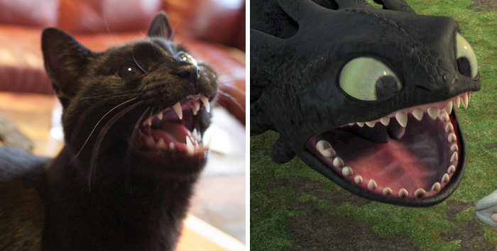 Not So Toothless
