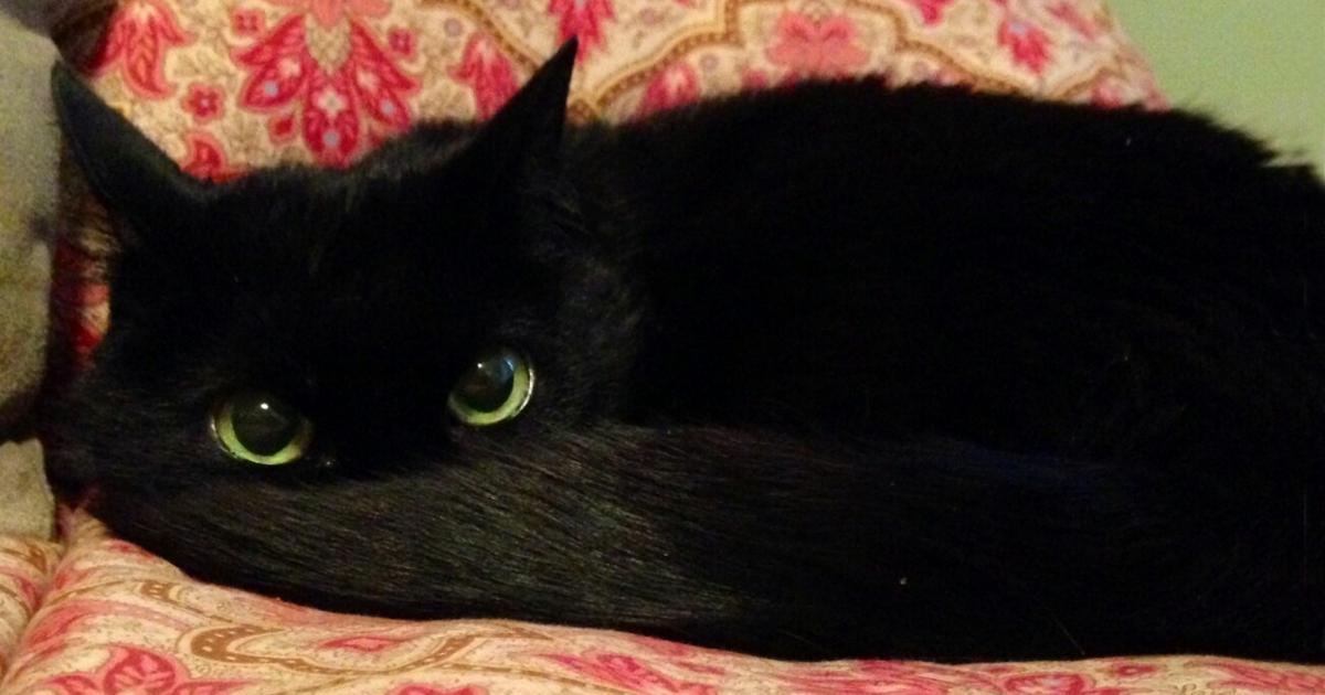 Cats Toothless Lookalikes on Cute Animal Reading Log