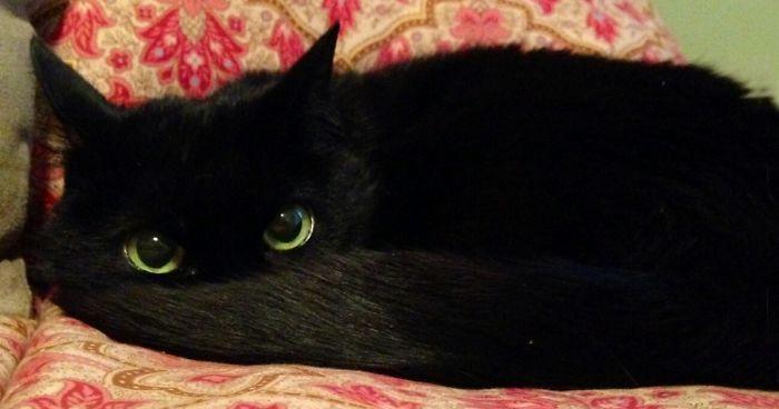 37 Schwarze Katzen Die Eigentlich Ohnezahn Inkognito Sind Bored